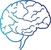 7782583 arte de la ilustraci n de un cerebro humano con fondo aislado El futuro de la web... ¿un cerebro compartido?